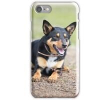 Missy... Young Kelpie....looking on... iPhone Case/Skin