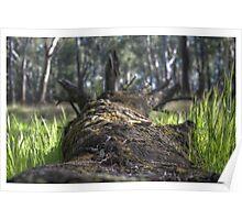 Fallen Log HDR Poster