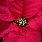 Christmas Flower by Debbie Oppermann