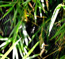 Wonderful Web by Lesleymc77