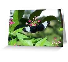 black and white butterfly Greeting Card