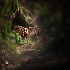 The Hunter by JBlaminsky