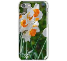 Spring Daffodil Flowers iPhone Case/Skin