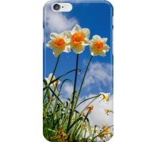 Spring Daffodil Flowers with Blue Sky iPhone Case/Skin
