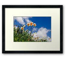 Spring Daffodil Flowers with Blue Sky Framed Print
