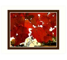 View through the Leaves, Autumn in Kentucky   Art Print