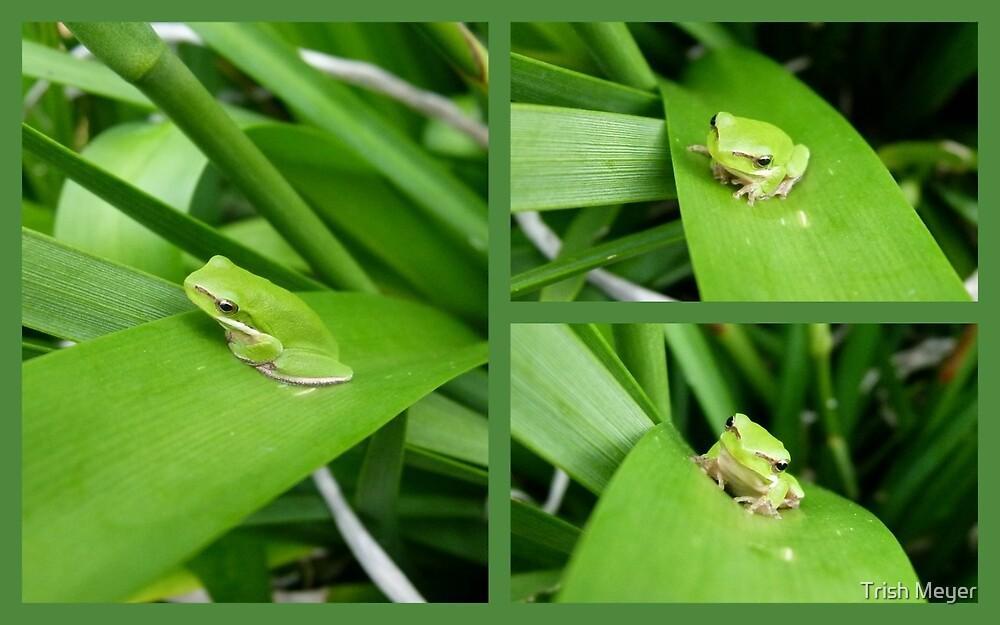 My Little Green Friend by Trish Meyer