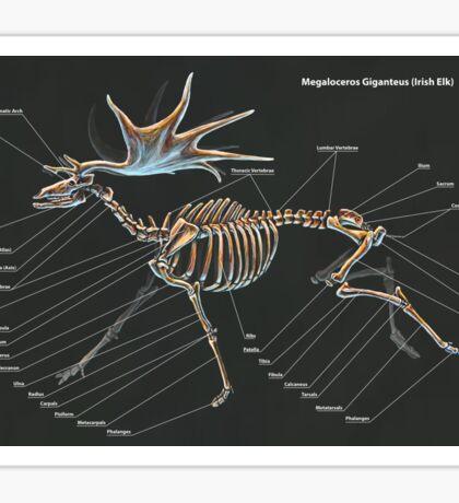 Megaloceros Giganteus Skeletal Study Sticker