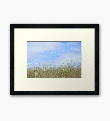 Dune grasses Framed Print