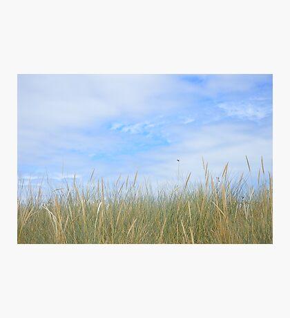 Dune grasses Photographic Print