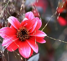 The Pink Red Flower by Mark Haynes Photography