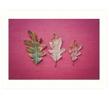 Three Leaves Art Print