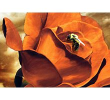 Enthralls the Bee  Photographic Print