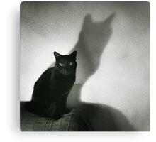 Portrait of black cat on sofa film noir chiaro scuro black and white square silver gelatin film analog photo Metal Print