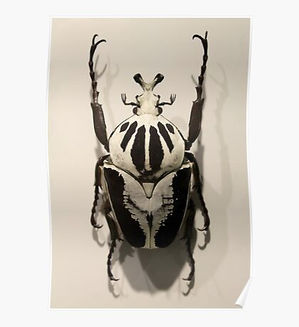Beetle Poster