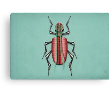 insect 1 Canvas Print