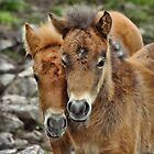 Siblings by Karen Peron