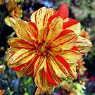 Dahlias - the colours of autumn by bubblehex08