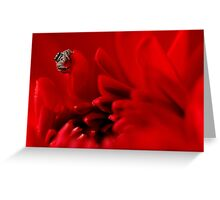 jumping spider and red dalhia Greeting Card
