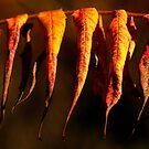 pending leaves by Manon Boily