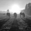 Horse Herd Grazing in a Sunrise Mist by Skye Ryan-Evans
