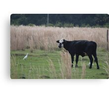 Brockle Faced Cow Canvas Print
