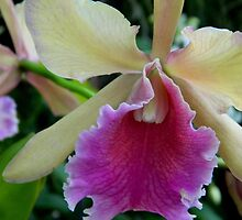 Orchid-1 by ctheworld