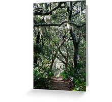 Cumberland Island Trail Greeting Card