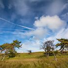 Beautiful sky & wind swept trees by M.S. Photography & Art