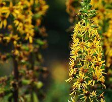 Royal Botanic Garden (Edinburgh)_2 by dyanera