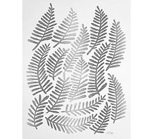 Silver Fronds Photographic Print