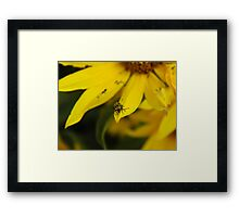 Oh, Hello!! Framed Print