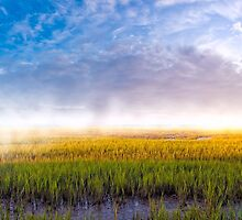 Foggy Morning On The Coastal Marshes of Georgia by Mark Tisdale