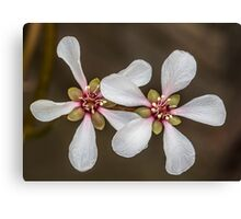 Macro Blossom Flowers Canvas Print