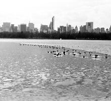 Frozen Central Park Reservoir in NYC by dearmoon