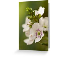 White Alpine Flower Greeting Card