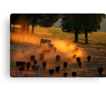 Waiting til the Cows come home Canvas Print