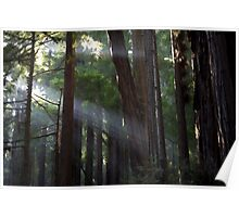 Forest Light - Shafts of Sun Light beam through the trees Poster
