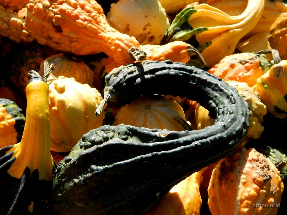 Autumn Gourds   ^ by ctheworld