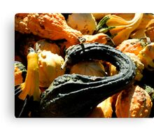 Autumn Gourds   ^ Canvas Print