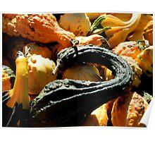 Autumn Gourds   ^ Poster