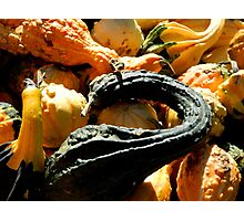 Autumn Gourds   ^ Photographic Print