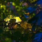 Fall by Backlight by Otto Danby II