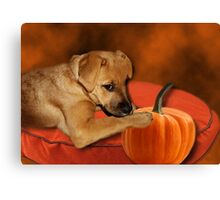 I CAN'T WAIT UNTIL MOM MAKES ME SOME PUMPKIN BISCUITS>>CANINE DOG PICTURE AND OR CARD Canvas Print