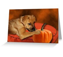 I CAN'T WAIT UNTIL MOM MAKES ME SOME PUMPKIN BISCUITS>>CANINE DOG PICTURE AND OR CARD Greeting Card