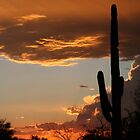saguaro sunset by RichImage