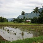Rice paddies, coconut palm trees and mountains by Tim Coleman