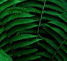Fern Triad by RVogler