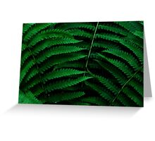 Fern Triad Greeting Card