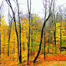 Fall-2014 by Elfriede Fulda